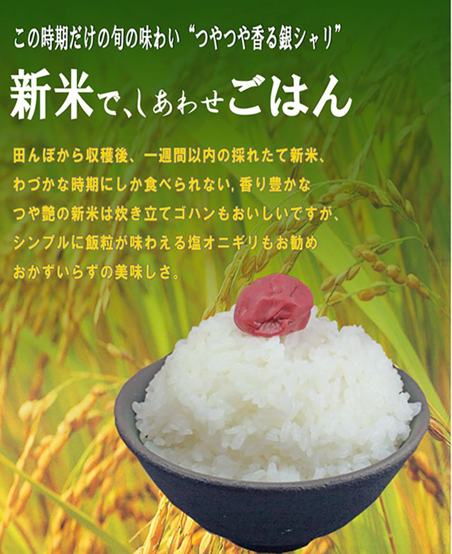米のダイマサの画像